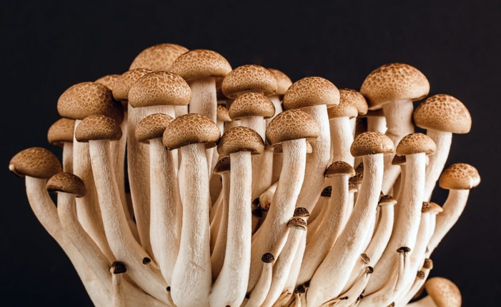 mushrooms cluster