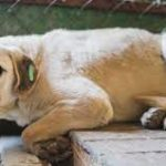 Australian town executes rescue dogs… because of COVID